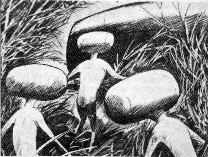 """La ricostruzione della scena dell'atterraggio di cui fu testimone Giampieri, realizzata dall'artista Nevio Zeccara per il volume """"Ufo in Italia l'ondata del 1954"""", scritto da Massimo Inardi."""