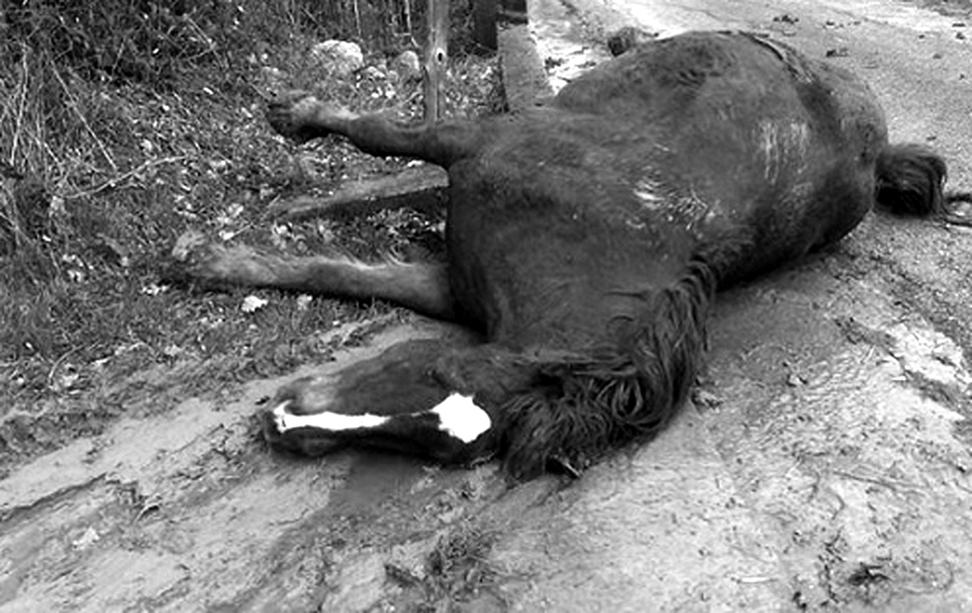LAV taglia su animali uccisi08