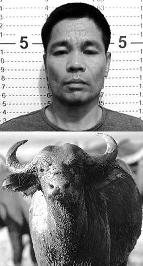 bufalo 2