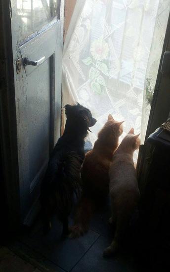 tre animali